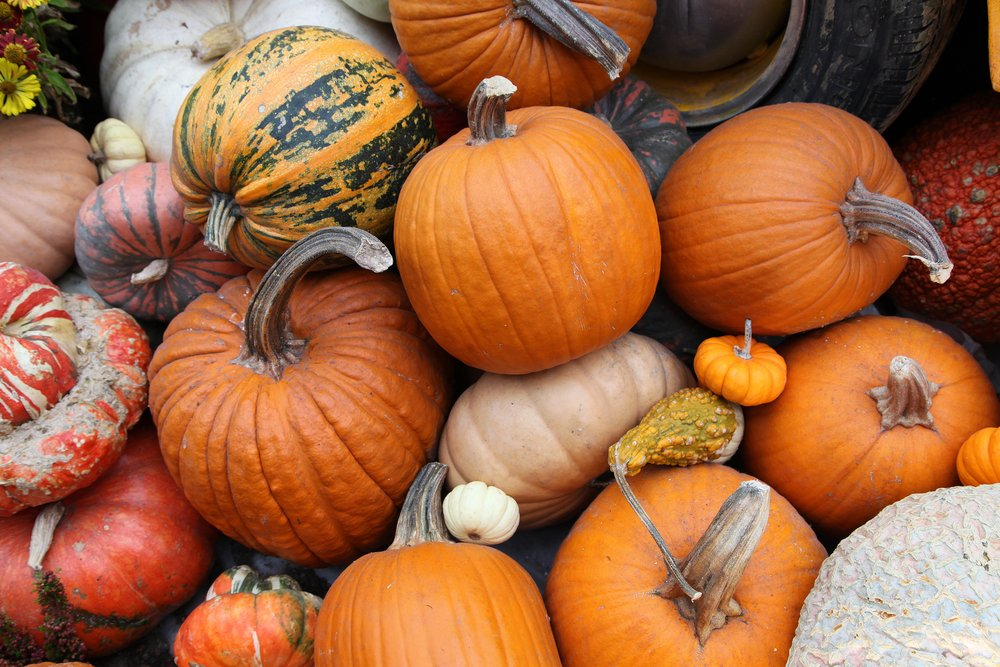 Enjoy Fall Fun in Northridge
